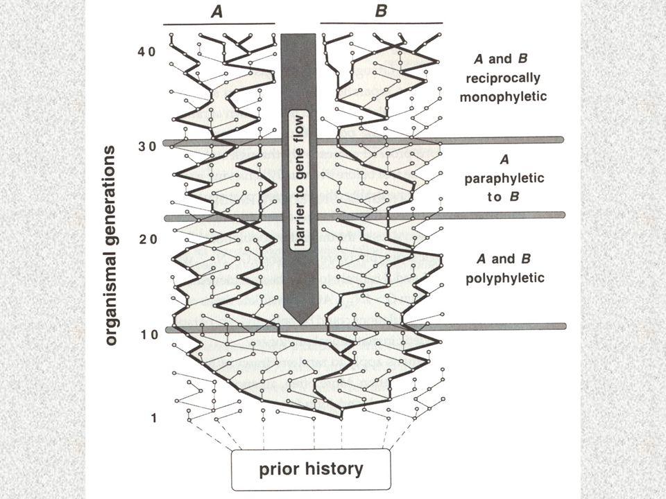 """Statistická fylogeografie Neigelův odhad rychlosti disperze –korelace mezi věkem linie a jejím rozšířením –Nevýhody náhodný vzorek přesné molekulární hodiny """"unconstrained random walk"""