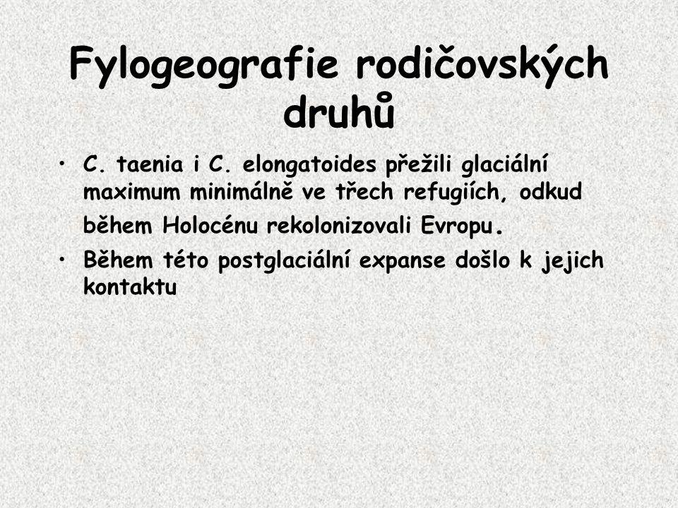 Fylogeografie rodičovských druhů C. taenia i C.