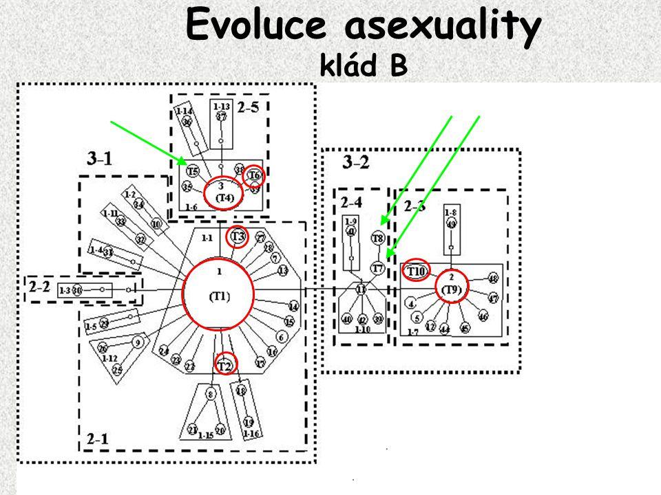 Evoluce asexuality klád B