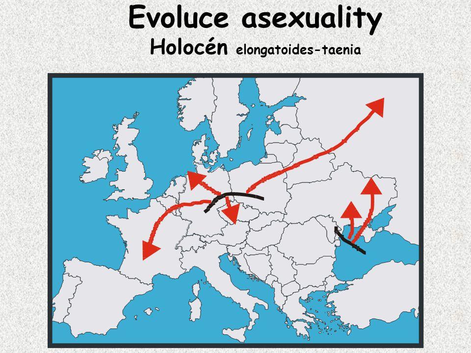 Evoluce asexuality Holocén elongatoides-taenia