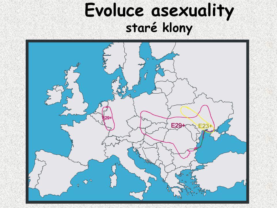 Evoluce asexuality staré klony