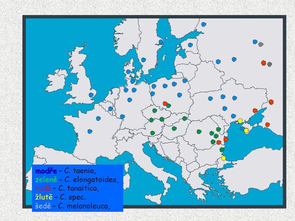 modře modře – C. taenia, zeleně – C. elongatoides, rudě – C.
