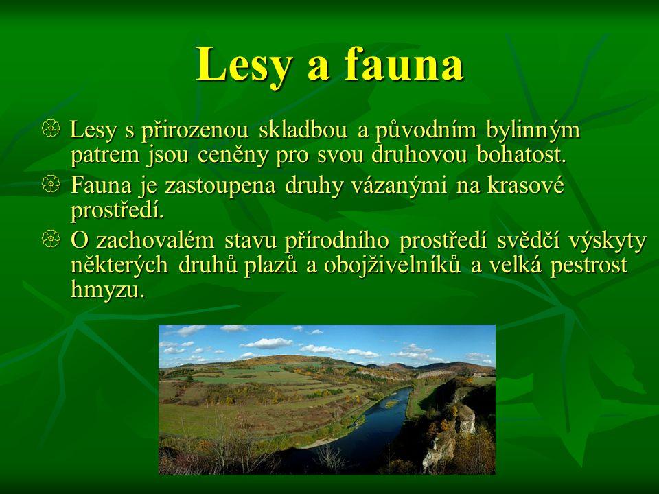 Lesy a fauna  Lesy s přirozenou skladbou a původním bylinným patrem jsou ceněny pro svou druhovou bohatost.