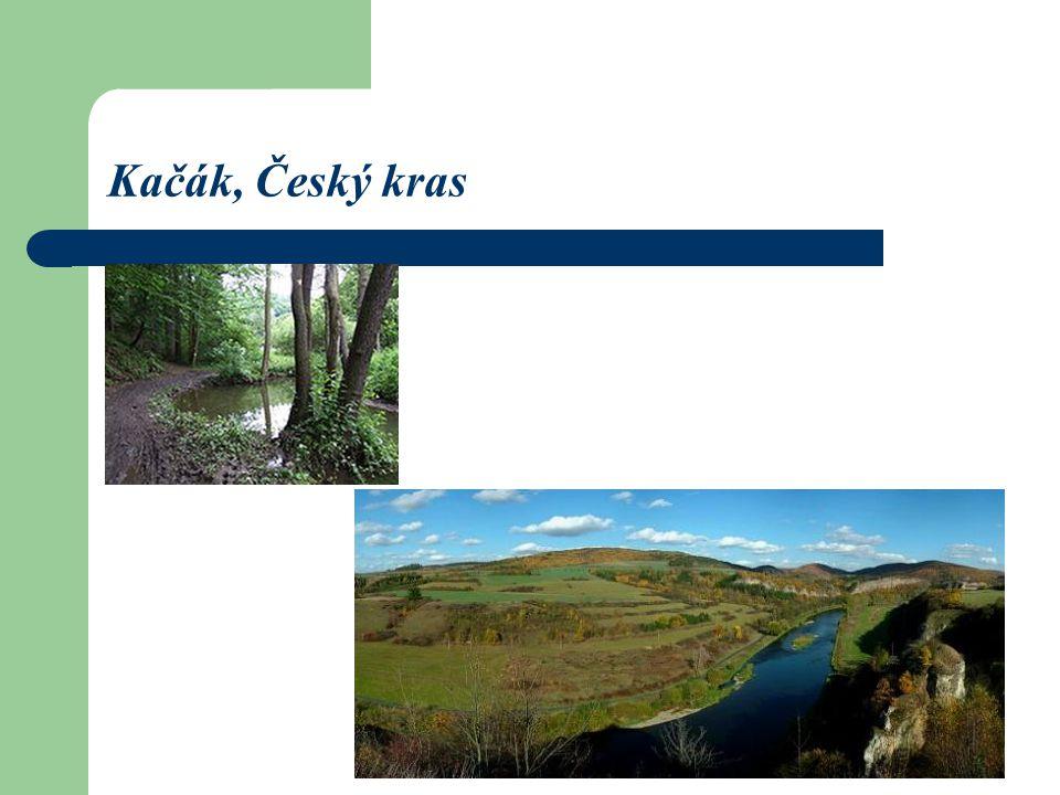 Kačák, Český kras