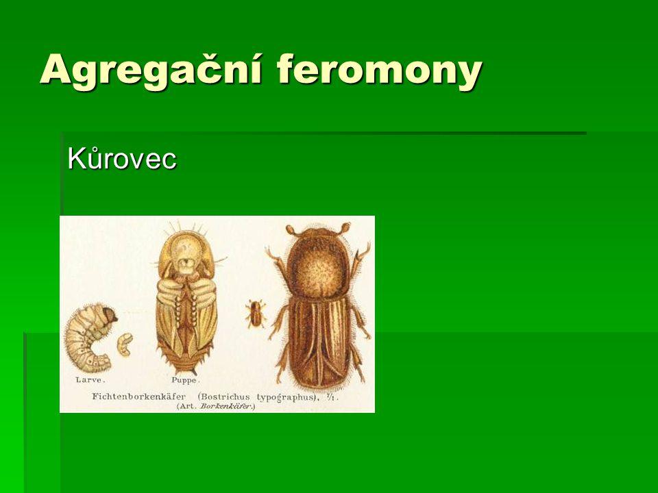 Agregační feromony Kůrovec
