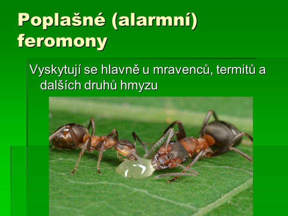 Poplašné (alarmní) feromony Vyskytují se hlavně u mravenců, termitů a dalších druhů hmyzu