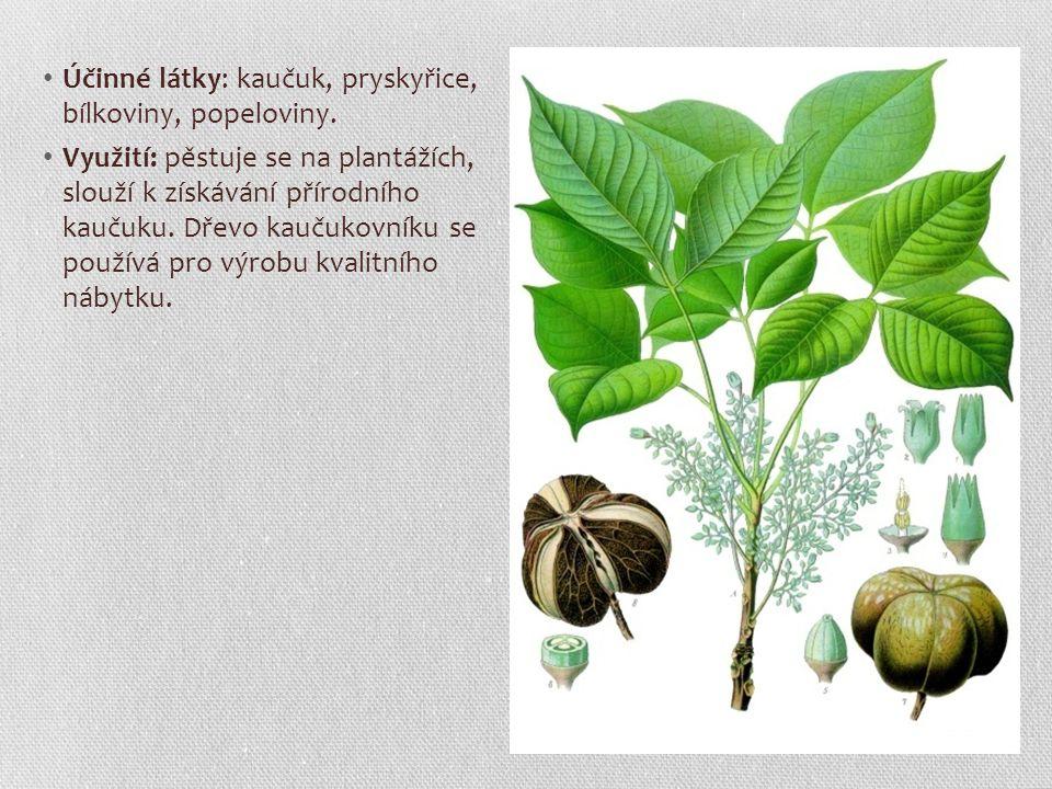 Účinné látky: kaučuk, pryskyřice, bílkoviny, popeloviny. Využití: pěstuje se na plantážích, slouží k získávání přírodního kaučuku. Dřevo kaučukovníku