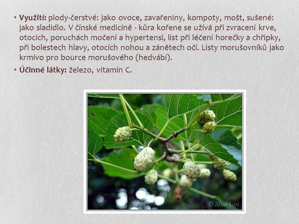 Využití: plody-čerstvé: jako ovoce, zavařeniny, kompoty, mošt, sušené: jako sladidlo. V čínské medicíně - kůra kořene se užívá při zvracení krve, otoc