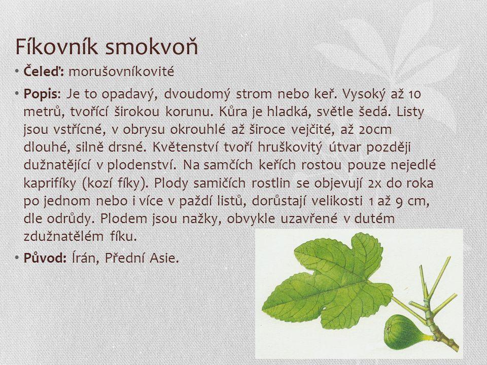 Fíkovník smokvoň Čeleď: morušovníkovité Popis: Je to opadavý, dvoudomý strom nebo keř. Vysoký až 10 metrů, tvořící širokou korunu. Kůra je hladká, svě