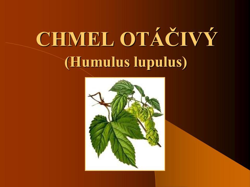 SOŠS a SOU KadaňSiličnaté rostliny - Chmel otáčivý12 Biologické vlastnosti chmele Podzemní části chmelové rostliny