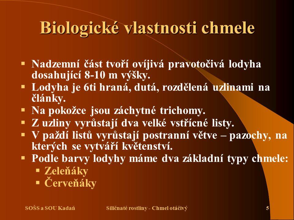 SOŠS a SOU KadaňSiličnaté rostliny - Chmel otáčivý6 Biologické vlastnosti chmele
