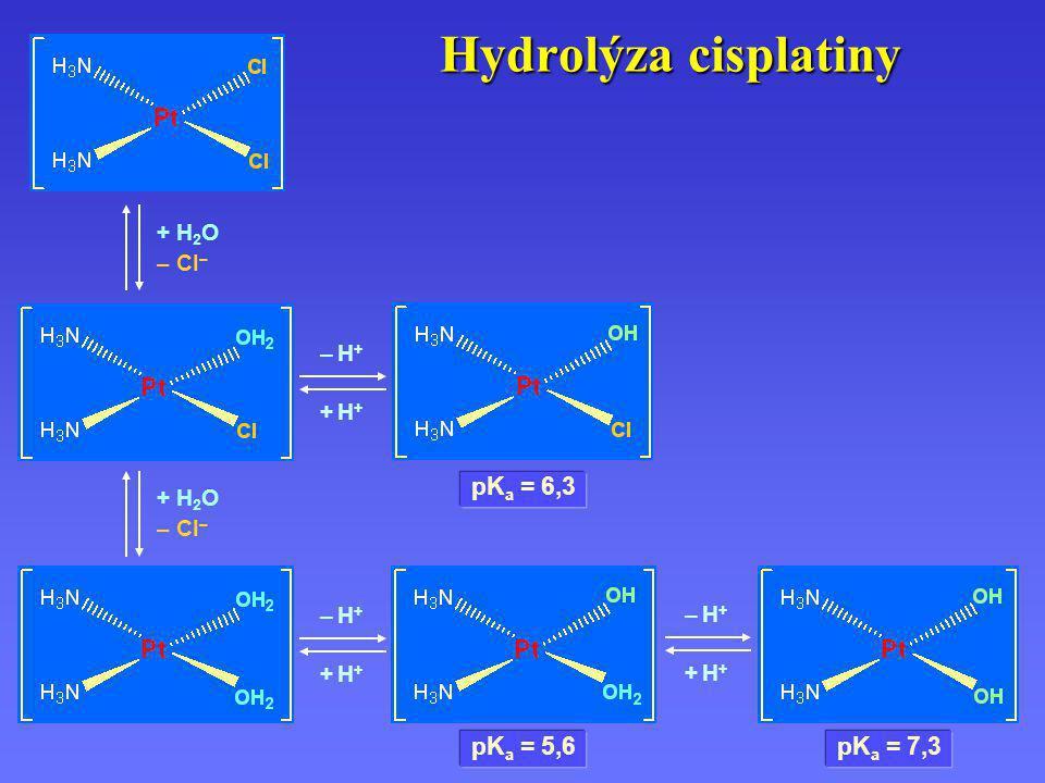 Hydrolýza cisplatiny – H+– H+ + H++ H+ – H+– H+ + H++ H+ – H+– H+ + H++ H+ + H 2 O – Cl – + H 2 O – Cl – pK a = 6,3 pK a = 5,6 pK a = 7,3
