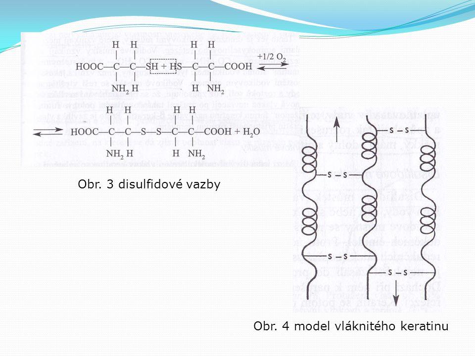 Obr. 3 disulfidové vazby Obr. 4 model vláknitého keratinu