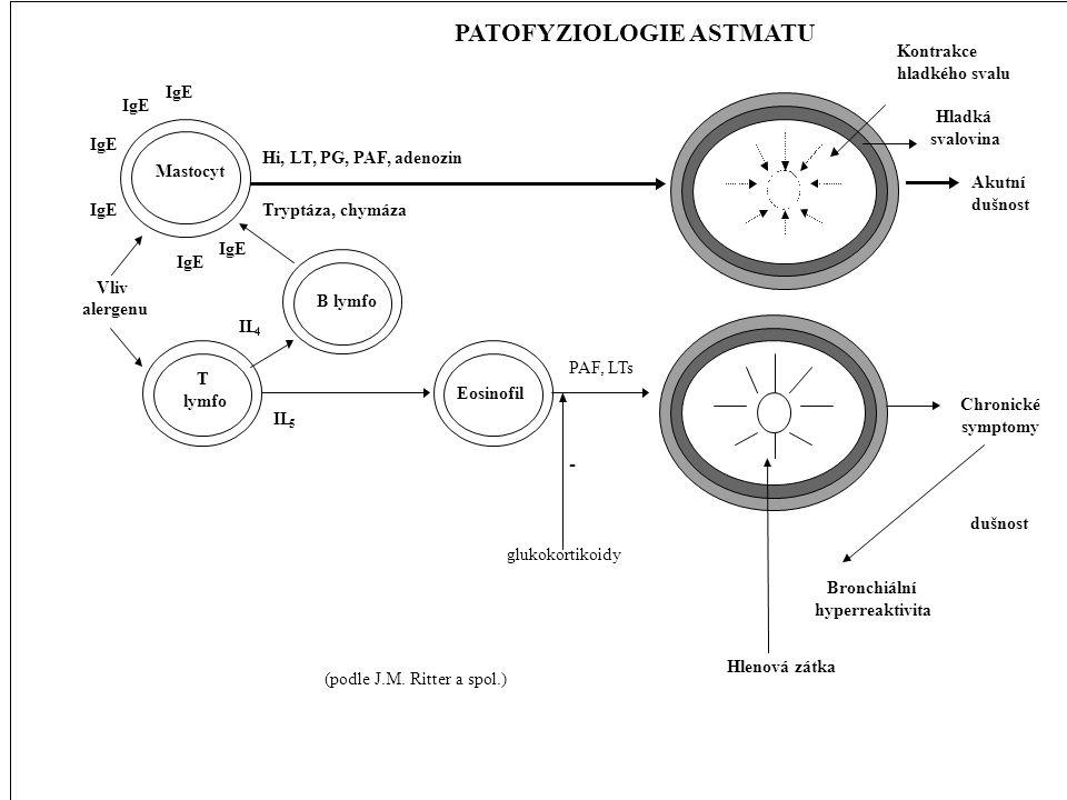 PATOFYZIOLOGIE ASTMATU Mastocyt Hladká svalovina Kontrakce hladkého svalu Hi, LT, PG, PAF, adenozin Tryptáza, chymáza IgE Vliv alergenu T lymfo Eosino
