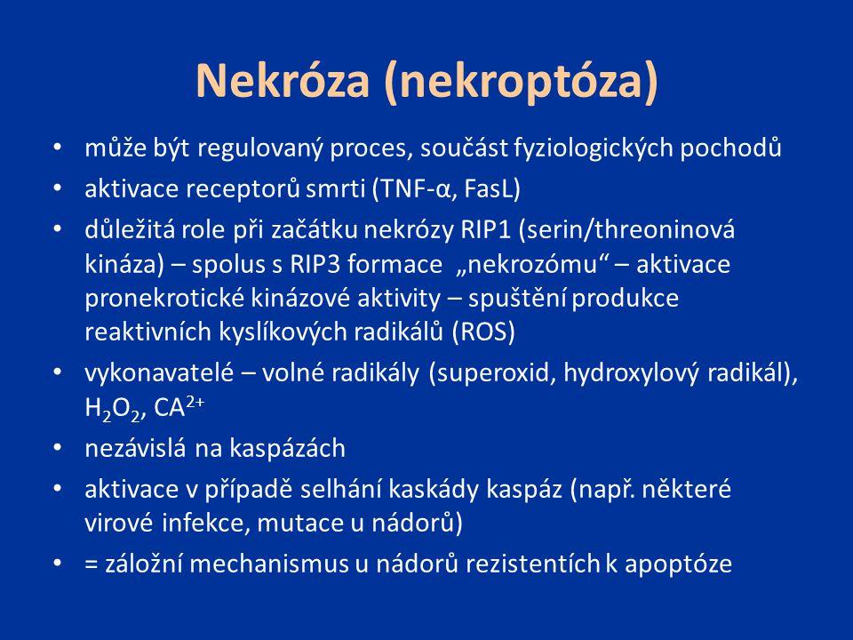 Nekróza (nekroptóza) může být regulovaný proces, součást fyziologických pochodů aktivace receptorů smrti (TNF-α, FasL) důležitá role při začátku nekró