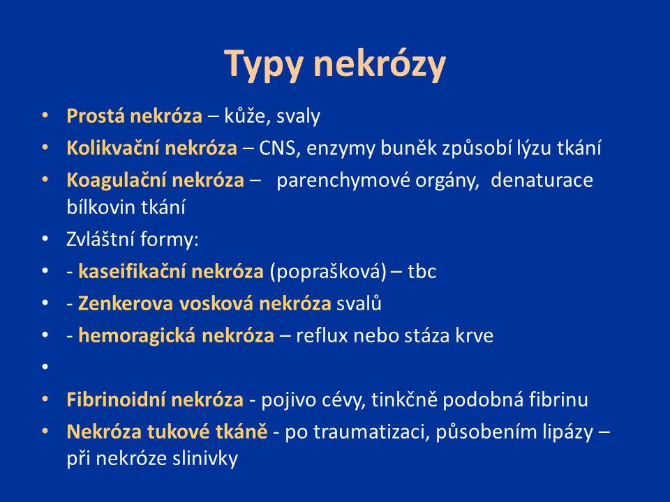 Typy nekrózy Prostá nekróza – kůže, svaly Kolikvační nekróza – CNS, enzymy buněk způsobí lýzu tkání Koagulační nekróza – parenchymové orgány, denatura