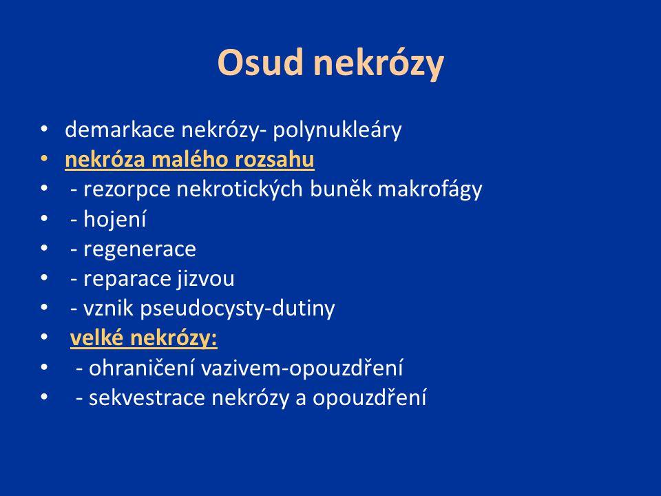 Osud nekrózy demarkace nekrózy- polynukleáry nekróza malého rozsahu - rezorpce nekrotických buněk makrofágy - hojení - regenerace - reparace jizvou -