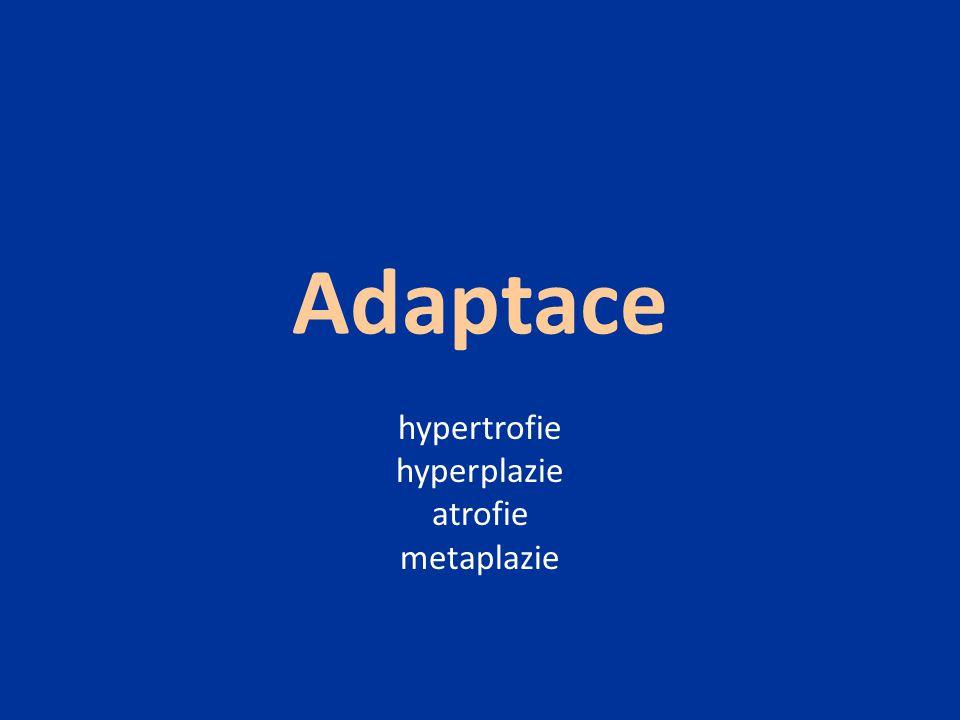 Adaptace hypertrofie hyperplazie atrofie metaplazie