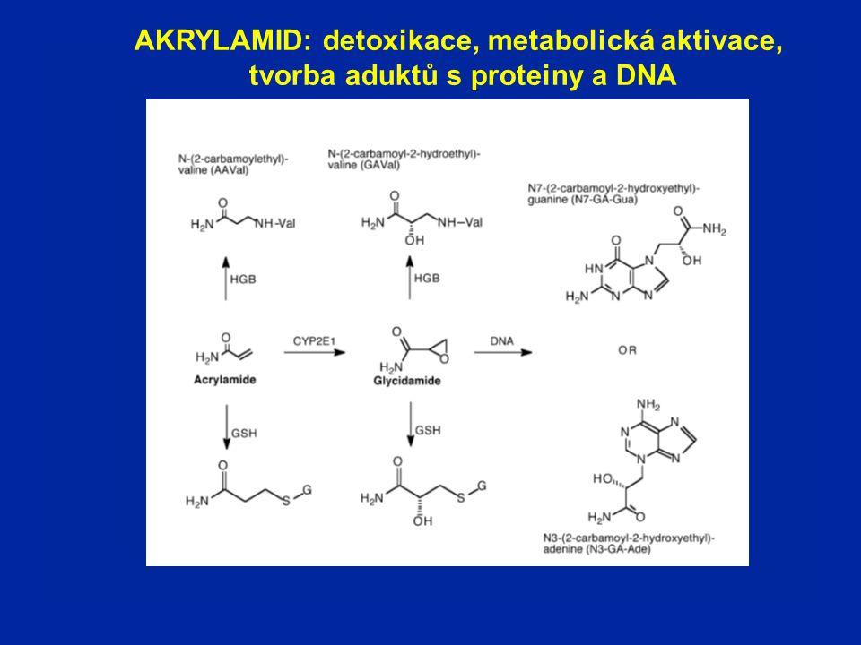 AKRYLAMID: detoxikace, metabolická aktivace, tvorba aduktů s proteiny a DNA