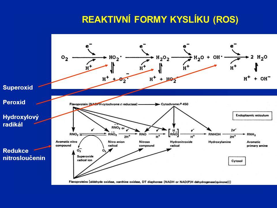 REAKTIVNÍ FORMY KYSLÍKU: redoxní cyklování chinonů / antioxidační enzymy