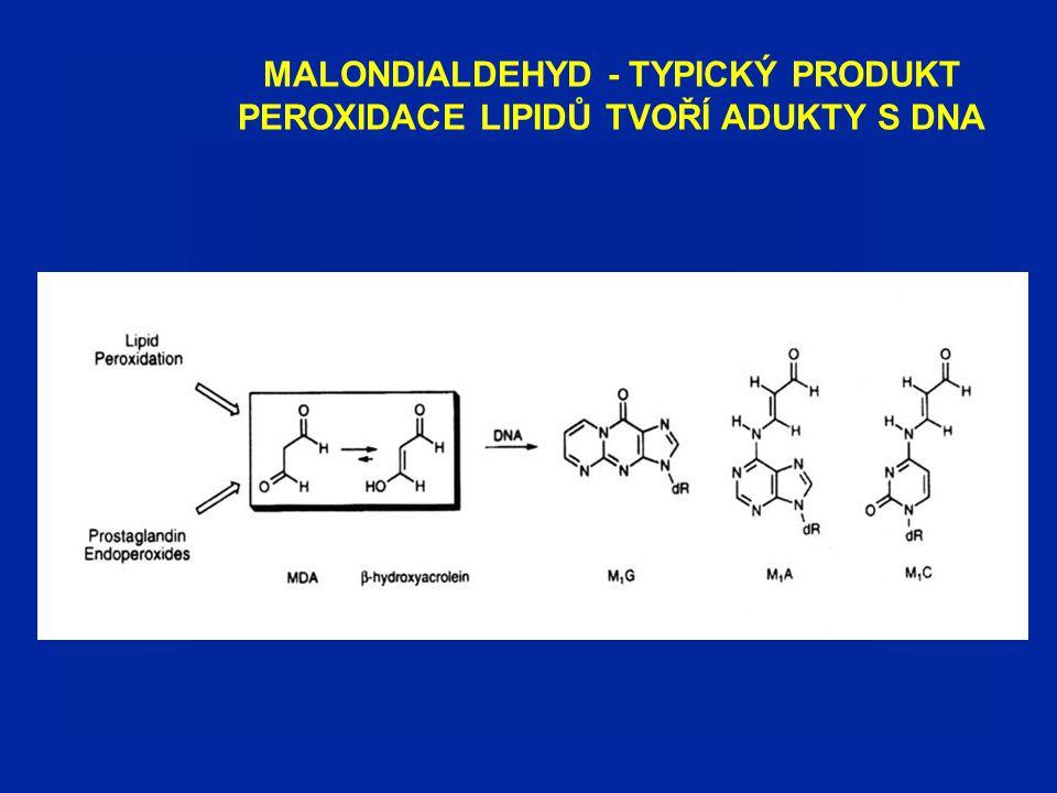 """HLAVNÍ TYPY POŠKOZENÍ DNA (""""apurinic sites a oxidačně modifikované báze) Oxidativní deaminace Depurinace (nestabilní modifikované nukleotidy)"""