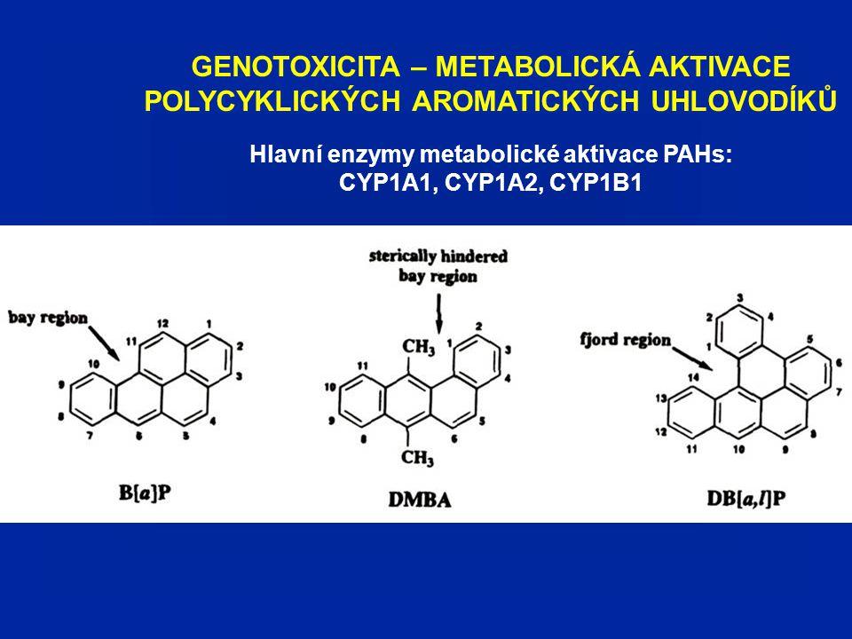 GENOTOXICITA – METABOLICKÁ AKTIVACE POLYCYKLICKÝCH AROMATICKÝCH UHLOVODÍKŮ Hlavní enzymy metabolické aktivace PAHs: CYP1A1, CYP1A2, CYP1B1