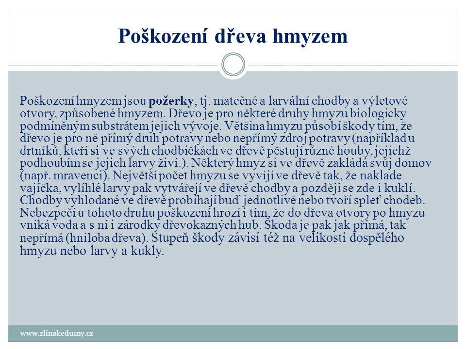 Poškození dřeva hmyzem www.zlinskedumy.cz Poškození hmyzem jsou požerky, tj. matečné a larvální chodby a výletové otvory, způsobené hmyzem. Dřevo je p
