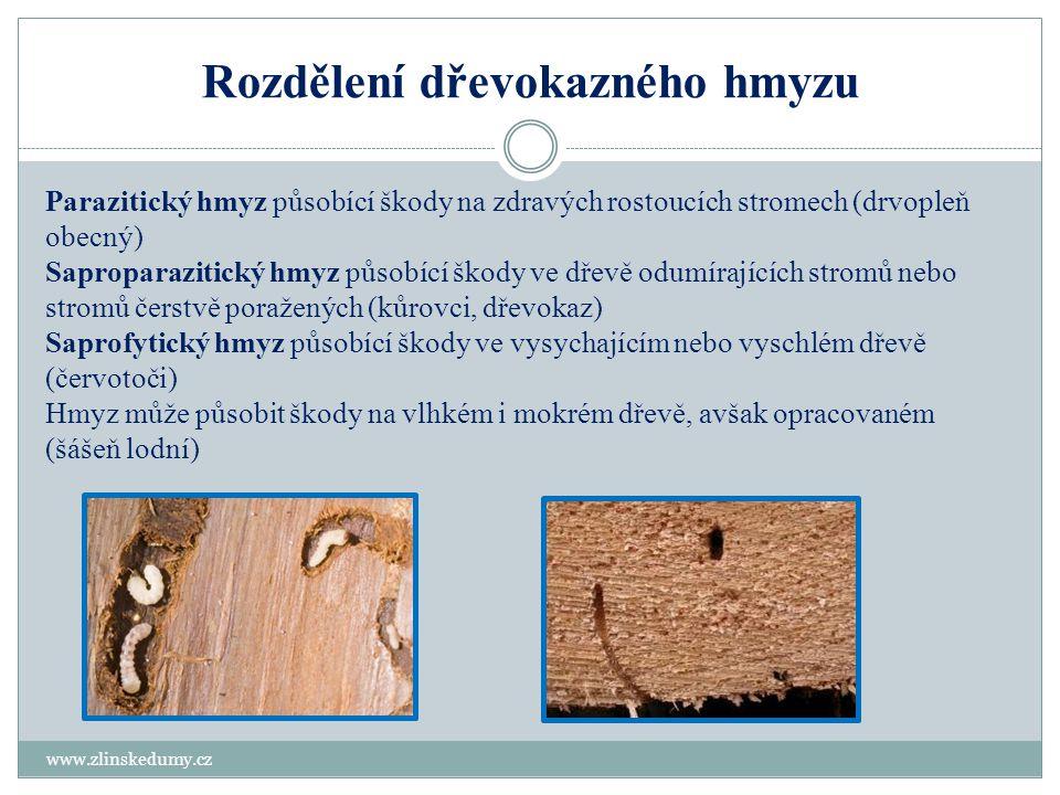 Rozdělení dřevokazného hmyzu www.zlinskedumy.cz Parazitický hmyz působící škody na zdravých rostoucích stromech (drvopleň obecný) Saproparazitický hmy