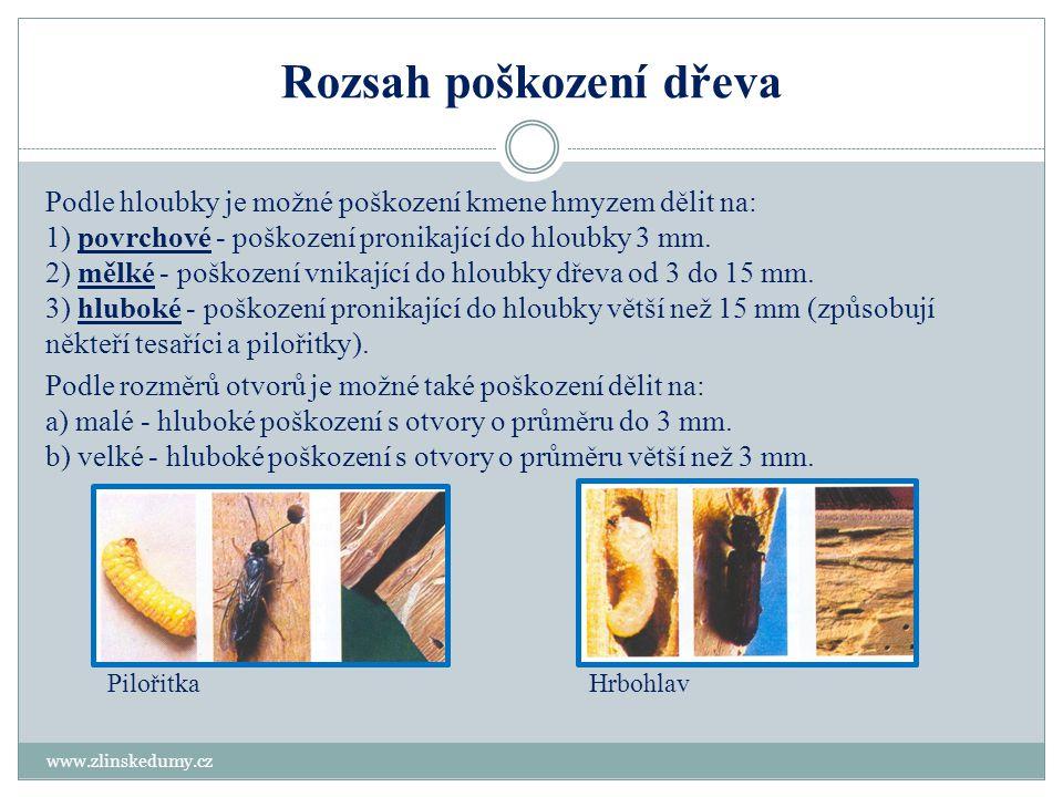 Rozsah poškození dřeva www.zlinskedumy.cz Podle hloubky je možné poškození kmene hmyzem dělit na: 1) povrchové - poškození pronikající do hloubky 3 mm