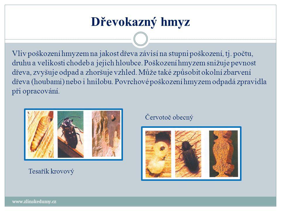 Dřevokazný hmyz www.zlinskedumy.cz Vliv poškození hmyzem na jakost dřeva závisí na stupni poškození, tj. počtu, druhu a velikosti chodeb a jejich hlou