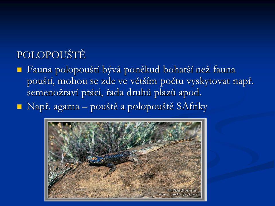 POLOPOUŠTĚ Fauna polopouští bývá poněkud bohatší než fauna pouští, mohou se zde ve větším počtu vyskytovat např.