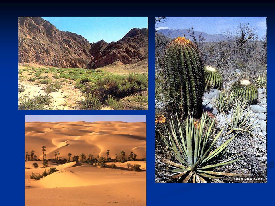 POLOPOUŠTĚ POLOPOUŠTĚ Rozsáhlejší vegetační kryt – střídají se otevřené holé plochy s hustšími porosty Rozsáhlejší vegetační kryt – střídají se otevřené holé plochy s hustšími porosty Rostliny: kaktusy, pryšce, ale i trnité keře Rostliny: kaktusy, pryšce, ale i trnité keře