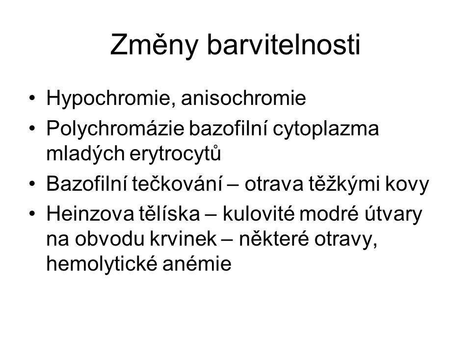 Změny barvitelnosti Hypochromie, anisochromie Polychromázie bazofilní cytoplazma mladých erytrocytů Bazofilní tečkování – otrava těžkými kovy Heinzova tělíska – kulovité modré útvary na obvodu krvinek – některé otravy, hemolytické anémie