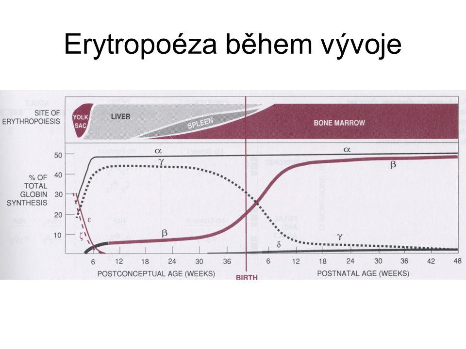 Erytropoéza během vývoje