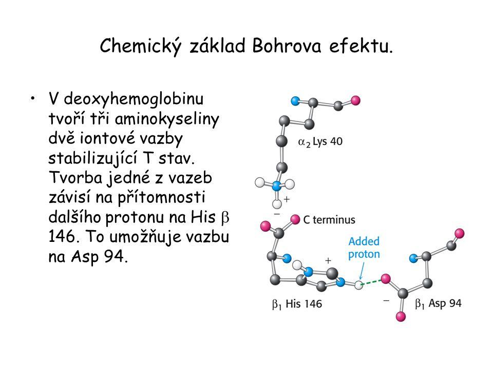 Chemický základ Bohrova efektu. V deoxyhemoglobinu tvoří tři aminokyseliny dvě iontové vazby stabilizující T stav. Tvorba jedné z vazeb závisí na přít