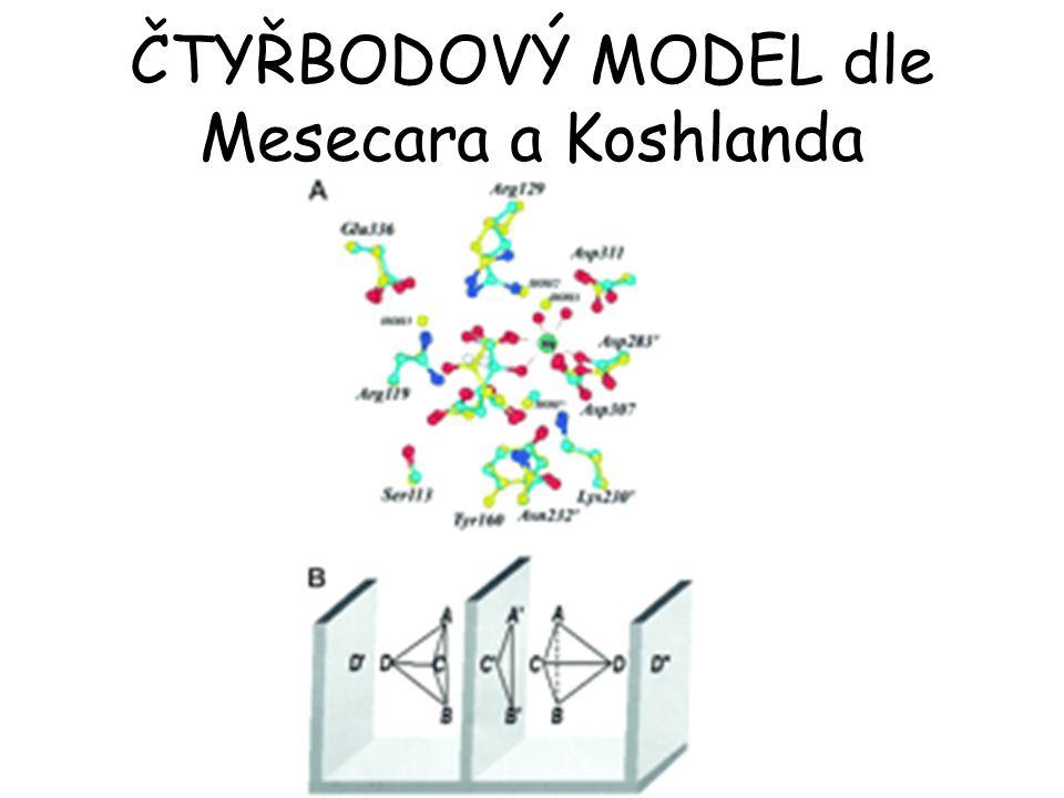 ČTYŘBODOVÝ MODEL dle Mesecara a Koshlanda