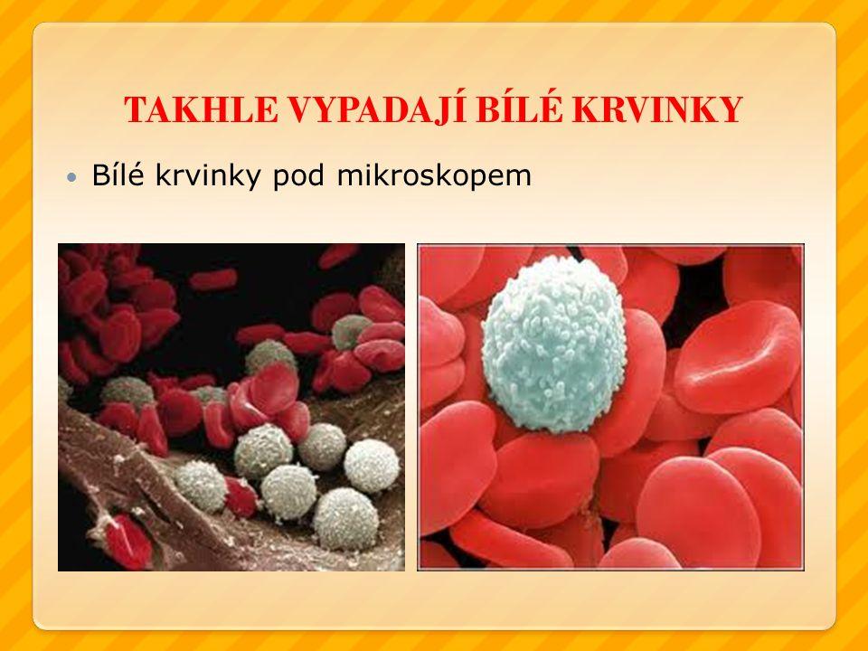 TAKHLE VYPADAJÍ BÍLÉ KRVINKY Bílé krvinky pod mikroskopem