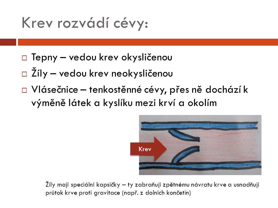 Krev rozvádí cévy:  Tepny – vedou krev okysličenou  Žíly – vedou krev neokysličenou  Vlásečnice – tenkostěnné cévy, přes ně dochází k výměně látek a kyslíku mezi krví a okolím Žíly mají speciální kapsičky – ty zabraňují zpětnému návratu krve a usnadňují průtok krve proti gravitace (např.