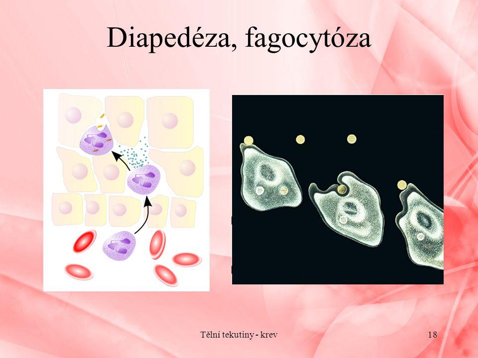 Diapedéza, fagocytóza Tělní tekutiny - krev18