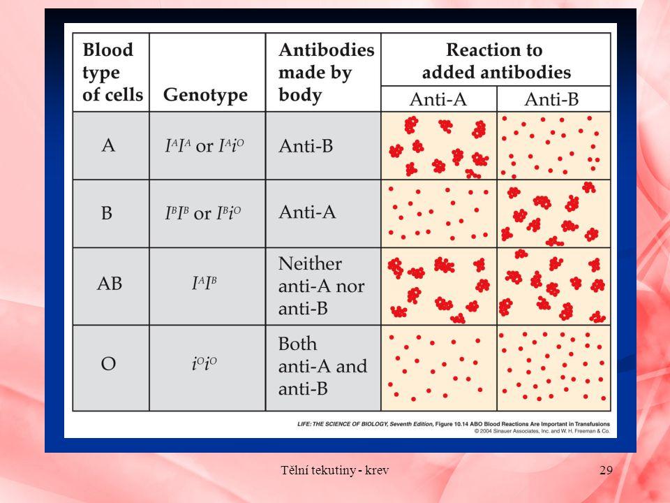 29Tělní tekutiny - krev