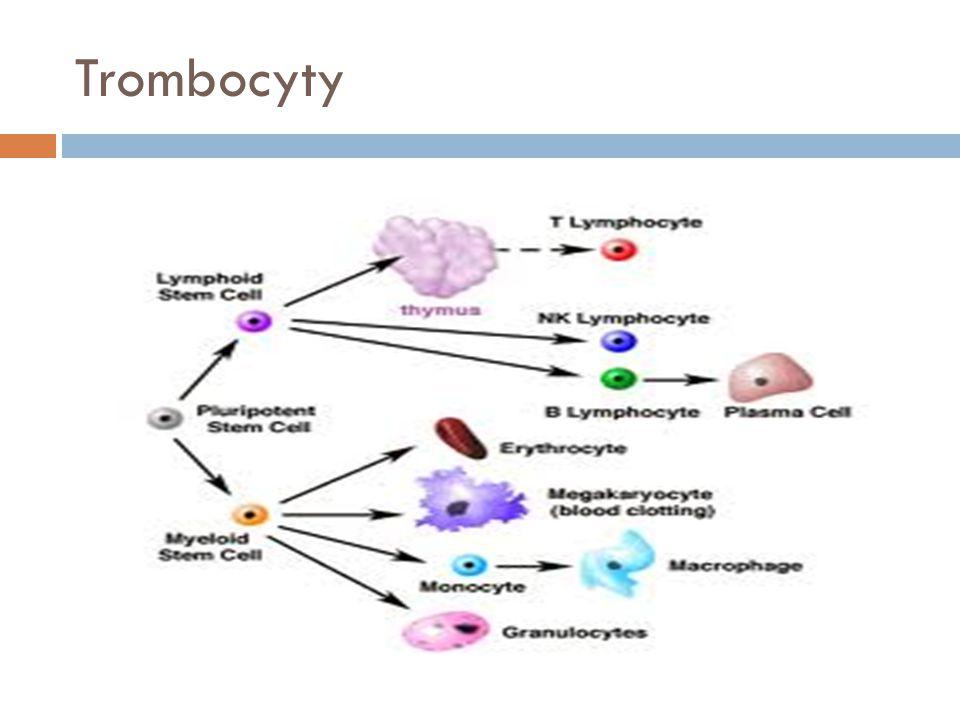  Vznik v kostní dřeni  Úlomky cytoplazmy megakaryocytů  Regulace novotvorby Tr  Trombopoetin  Funkce  Hemostáza Reakce cév serotonin Reakce tromobocytů – bílý trombus Adheze a agregace Reakce koagulačních faktorů – červený trombus Koagulační kaskáda = hemokoagulace