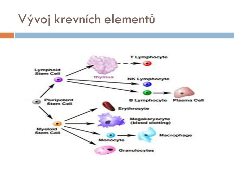 Erytrocyty  Vznik v kostní dřeni  Lokalizace v dospělosti  + regulace syntézy, faktory  Stadia Proerytroblast Erytroblast Retikulocyt Zralý erytrocyt  Typický tvar, rozměry, životnost  Slezina a její význam  Funkce erytrocytu  Transport dýchacích plynů  Nárazníkový systém – udržování stáleho pH vnitřního prostředí