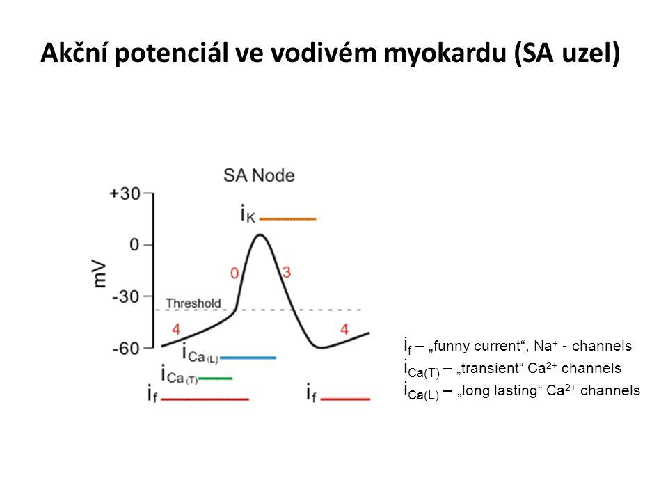 "Akční potenciál ve vodivém myokardu (SA uzel) i f – ""funny current"", Na + - channels i Ca(T) – ""transient"" Ca 2+ channels i Ca(L) – ""long lasting"" Ca"
