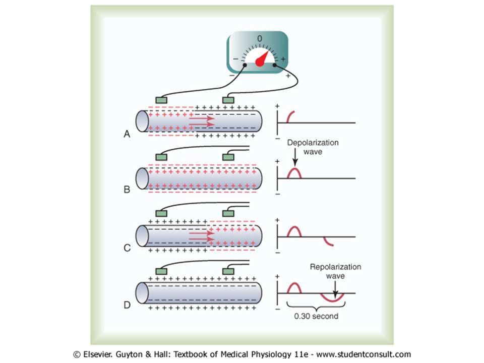 PQ interval (0.12 – 0.20s) QRS komplex (0.06 – 0.10s) QT interval – koriguje se vzhledem k srdeční frekvenci – QTc U vlna – snad repolarizace vnitřních vrstev myokardu LK