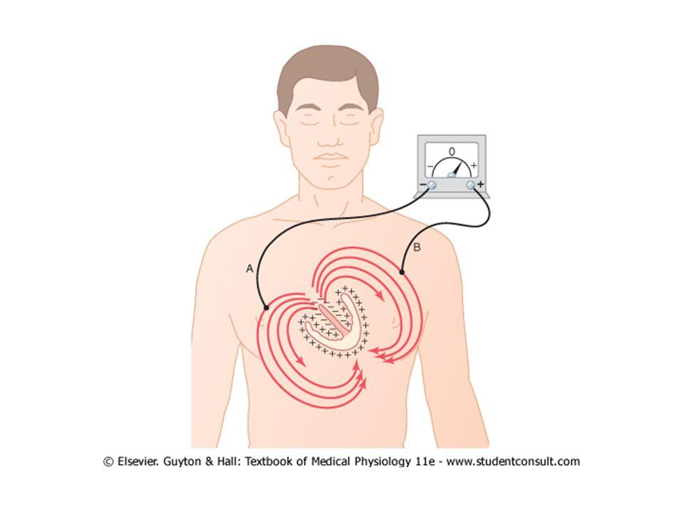 EKG svody: I, II, III aVR, aVL, aVF V1,V2,V3,V4,V5,V6