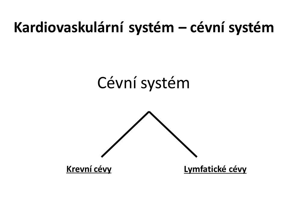 Kardiovaskulární systém – cévní systém Cévní systém Krevní cévy Lymfatické cévy