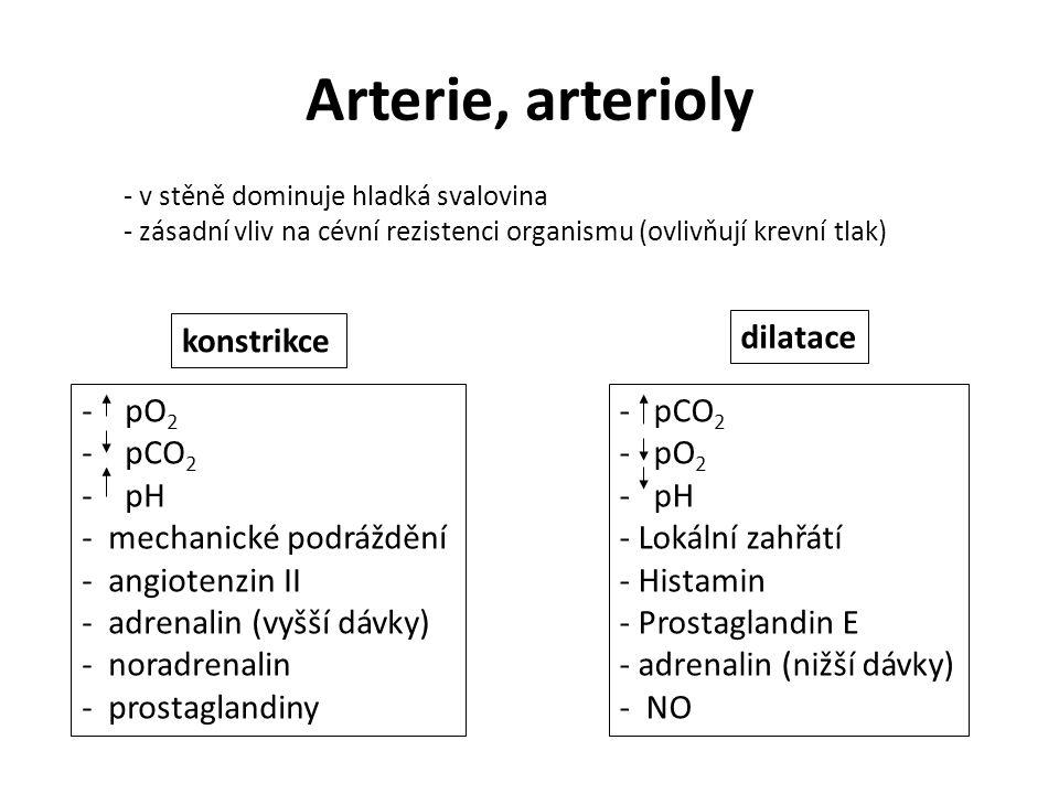 Arterie, arterioly - v stěně dominuje hladká svalovina - zásadní vliv na cévní rezistenci organismu (ovlivňují krevní tlak) konstrikce - pO 2 - pCO 2