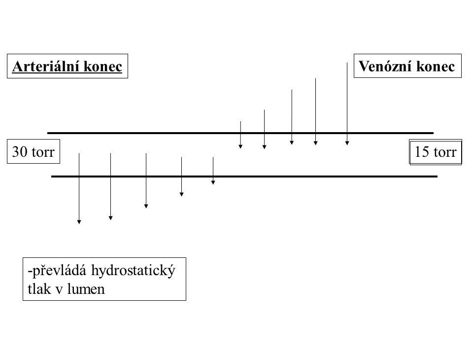 Arteriální konecVenózní konec 30 torr15 torr -převládá hydrostatický tlak v lumen
