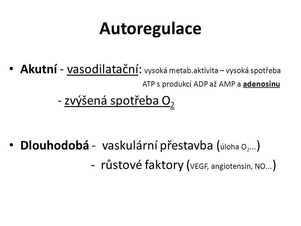 Autoregulace Akutní - vasodilatační: vysoká metab.aktivita – vysoká spotřeba ATP s produkcí ADP až AMP a adenosinu - zvýšená spotřeba O 2 Dlouhodobá -