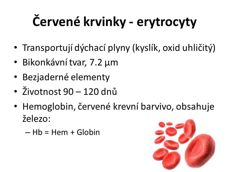 Červené krvinky - erytrocyty Transportují dýchací plyny (kyslík, oxid uhličitý) Bikonkávní tvar, 7.2 μm Bezjaderné elementy Životnost 90 – 120 dnů Hem